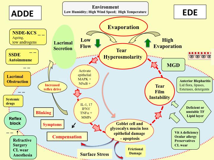 Figure 1: The vicious circle of dry eye disease